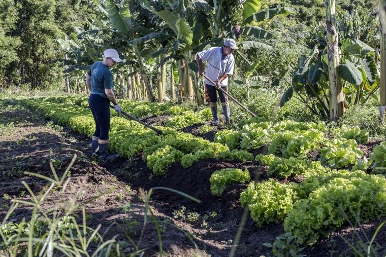 Orgânicos Sabor e Saúde