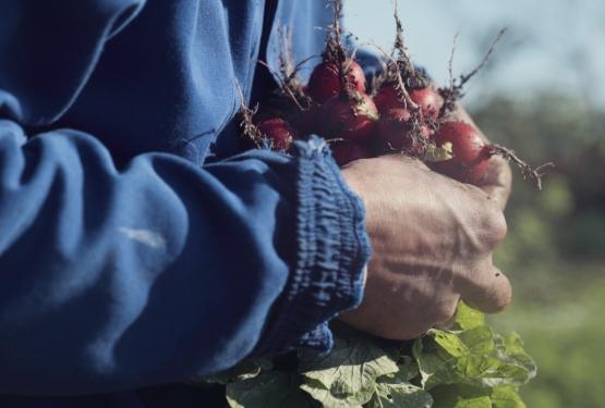 O espírito da feira: Como a primeira feira ecológica do Brasil – a Feira dos Agricultores Ecologistas, em Porto Alegre – tornou-se espaço de memórias, trocas e conexão.